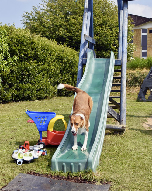 Ragamuffin on the slide - having fun!