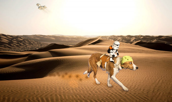 Ragamuffin as a dewback with stormtrooper rider